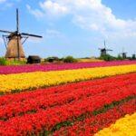 Stevige groei Nederlandse economie in vierde kwartaal en heel 2016