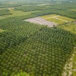Multinationals vernietigen regenwoud