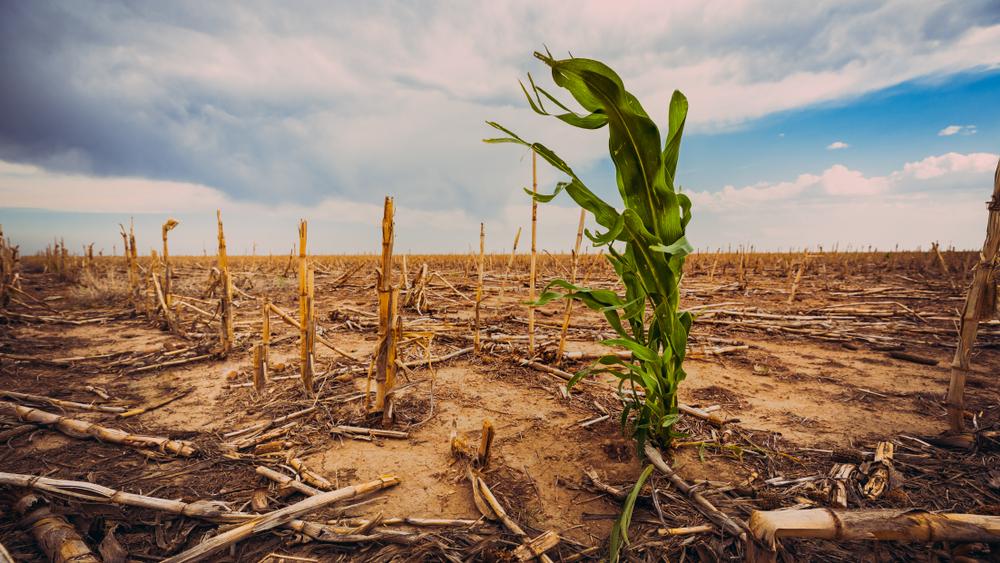 """Corporates reageren op rapport IPCC: """"Nu echt gaan handelen"""""""